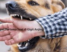 Pertolongan Pertama Saat di Gigit Anjing